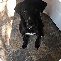 Adopt A Pet :: Griff - Alpharetta, GA