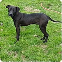Adopt A Pet :: Rupert - Shreveport, LA