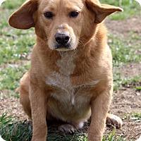Adopt A Pet :: Ian - Waldorf, MD