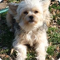 Adopt A Pet :: Cinderella - Overland Park, KS