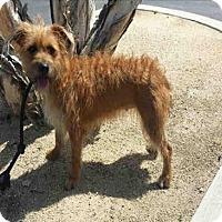 Adopt A Pet :: Ophelia - Encino, CA