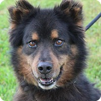Adopt A Pet :: PELE:Low Fees / Neutered - Red Bluff, CA