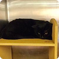 Adopt A Pet :: Bettina - Colmar, PA
