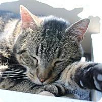 Adopt A Pet :: Jonesy - Troy, IL
