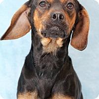 Adopt A Pet :: Grant - Encinitas, CA