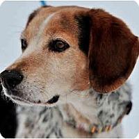 Adopt A Pet :: MURPHY - Wakefield, RI