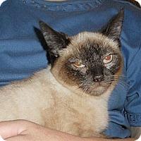 Adopt A Pet :: Jade   (a beauty) - Sterling Hgts, MI