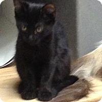 Adopt A Pet :: Roxxy - Monroe, GA