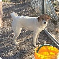 Adopt A Pet :: Vinta - Staunton, VA