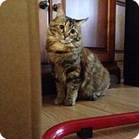 Adopt A Pet :: Puma - Laguna Woods, CA