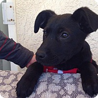 Adopt A Pet :: Kala - BONITA, CA