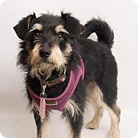 Adopt A Pet :: Barkley - Santa Cruz, CA