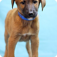 Adopt A Pet :: Conan - Waldorf, MD