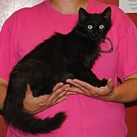 Adopt A Pet :: Denny - Parsons, KS