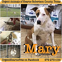 Adopt A Pet :: Mary Christmas - Hearne, TX