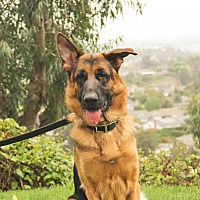 Adopt A Pet :: Easton - Laguna Niguel, CA