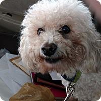 Adopt A Pet :: King - Farmington Hills, MI
