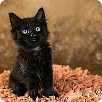 Adopt A Pet :: Teddy - Eagan, MN