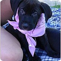 Adopt A Pet :: Esme sweet gal - Sacramento, CA