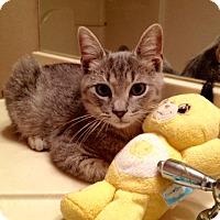 Adopt A Pet :: Hesse - Madisonville, LA