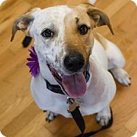 Adopt A Pet :: Mara - PORTLAND, ME