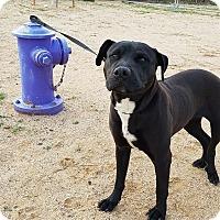 Adopt A Pet :: LoveBug - California City, CA