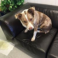 Adopt A Pet :: CHAZ - Sonora, CA