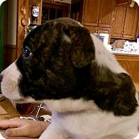 Adopt A Pet :: Martin - Toms River, NJ