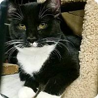 Adopt A Pet :: Eightball - Philadelphia, PA