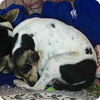 Adopt A Pet :: Dante - Lighthouse Point, FL