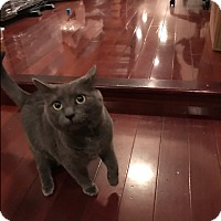 Adopt A Pet :: Jade (COURTESY POST) - Baltimore, MD