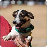 Adopt A Pet :: Twister - West Chester, OH