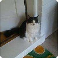 Adopt A Pet :: Turner - Arlington, VA