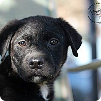 Adopt A Pet :: Archie - Marlton, NJ