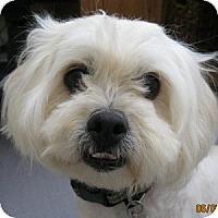 Adopt A Pet :: Haley - La Costa, CA