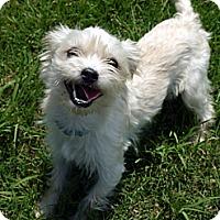 Adopt A Pet :: Vance - Baton Rouge, LA