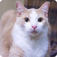 Adopt A Pet :: Jameson - Chicago, IL