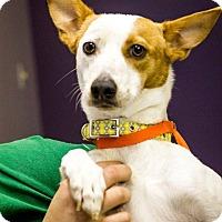 Adopt A Pet :: Trixie - Scottsdale, AZ