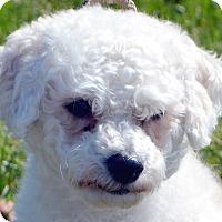 Adopt A Pet :: Harry-Adoption pending - Bridgeton, MO