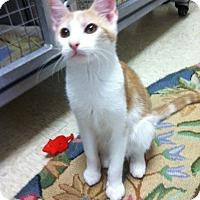Adopt A Pet :: Tucker - Trevose, PA