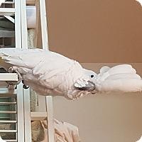Adopt A Pet :: Taylor - Lenexa, KS