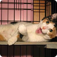 Adopt A Pet :: Wendie - Milford, MA