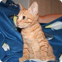 Adopt A Pet :: Duke - Tampa, FL
