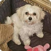 Adopt A Pet :: THIMBLE - Los Angeles, CA