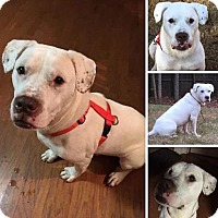 Adopt A Pet :: Rex - Jefferson, GA