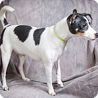 Adopt A Pet :: BELLA - Anna, IL