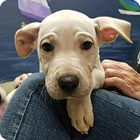 Adopt A Pet :: Peeta - Fresno, CA