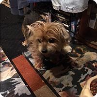 Adopt A Pet :: Marley - Algonquin, IL