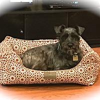 Adopt A Pet :: Jasper - Sharonville, OH