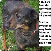 Adopt A Pet :: # 294-09 - RESCUED! - Zanesville, OH